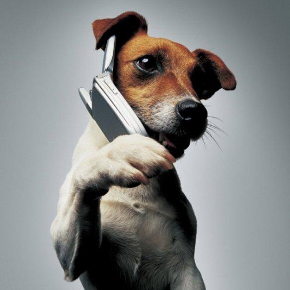 dogphone.jpg